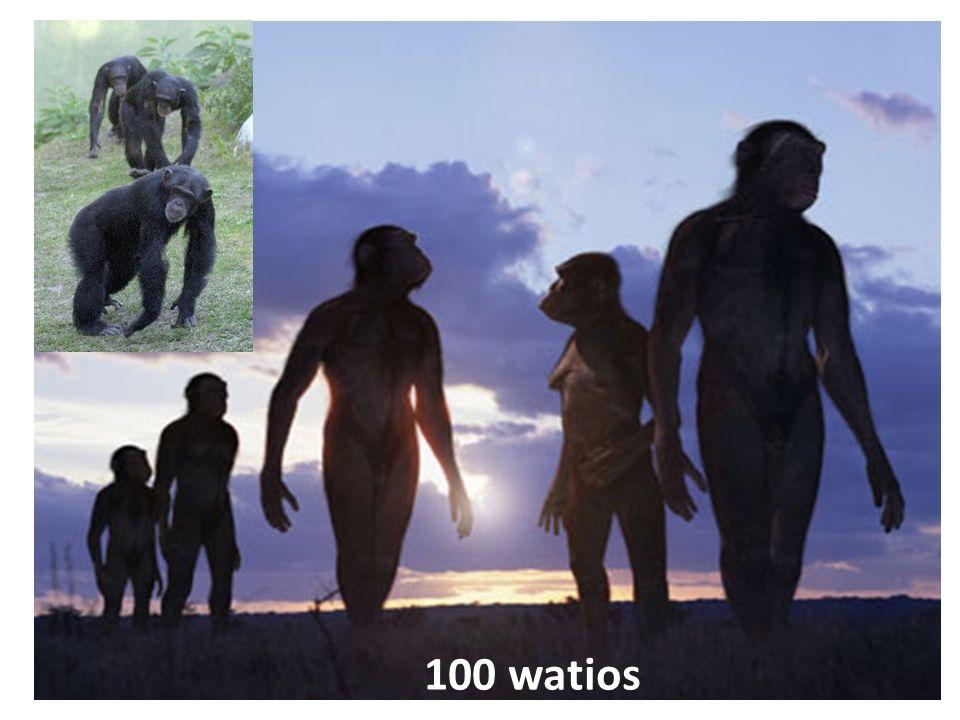 100 watios