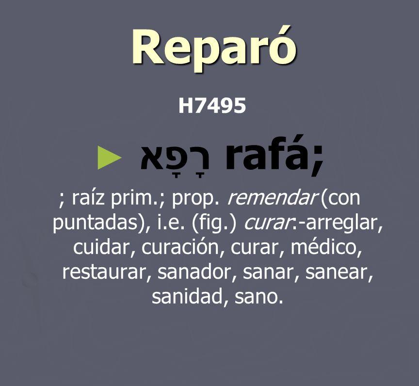 Reparó Reparó H7495 רָפָא rafá; ; raíz prim.; prop. remendar (con puntadas), i.e. (fig.) curar:-arreglar, cuidar, curación, curar, médico, restaurar,