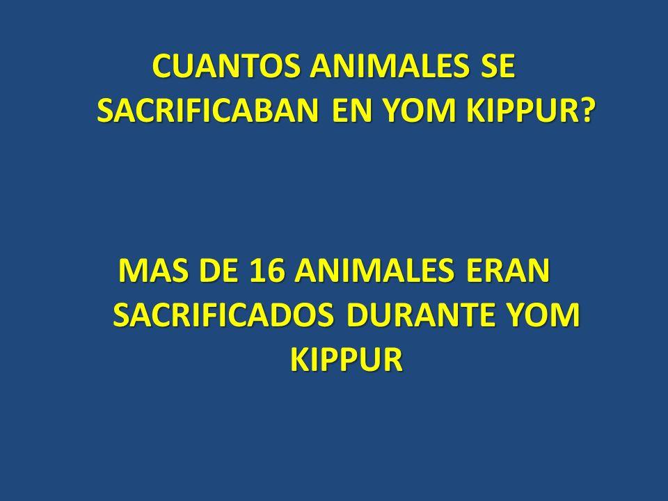 CUANTOS ANIMALES SE SACRIFICABAN EN YOM KIPPUR? MAS DE 16 ANIMALES ERAN SACRIFICADOS DURANTE YOM KIPPUR