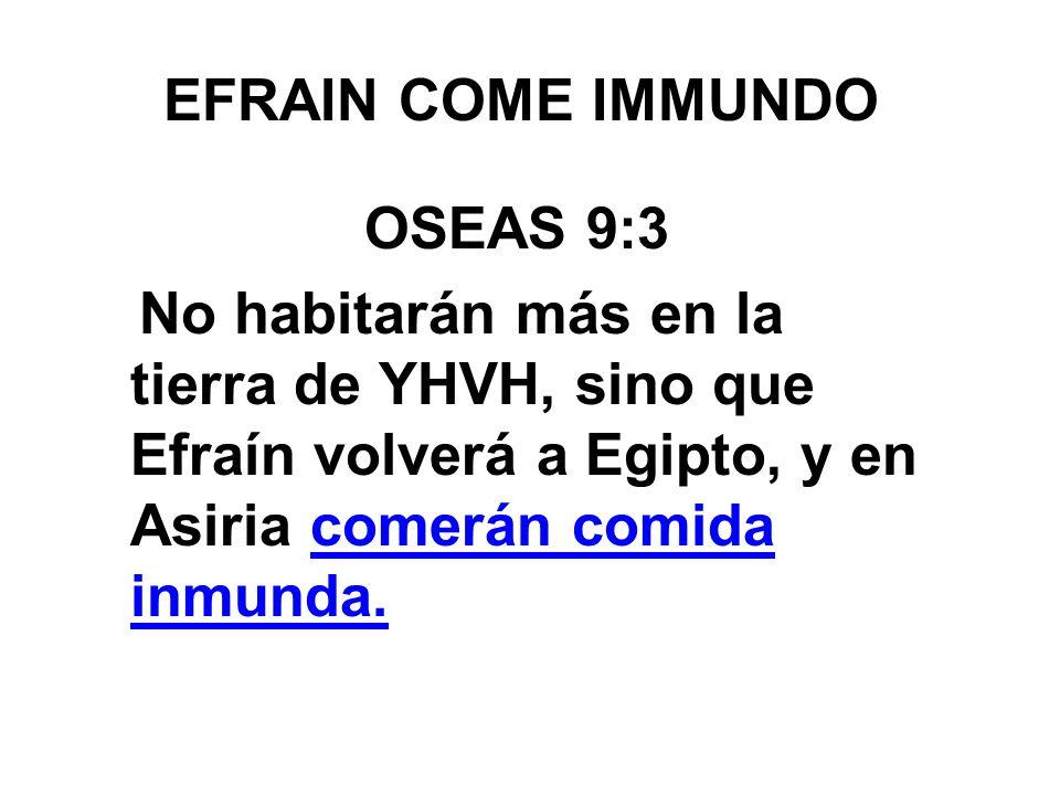 EFRAIN COME IMMUNDO OSEAS 9:3 No habitarán más en la tierra de YHVH, sino que Efraín volverá a Egipto, y en Asiria comerán comida inmunda.
