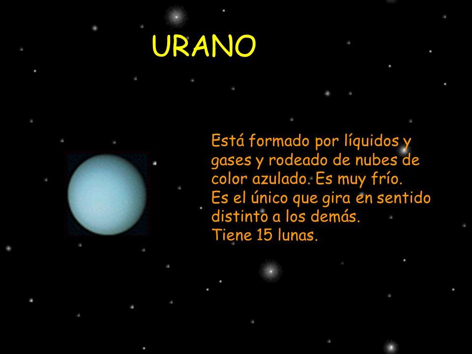 URANO Está formado por líquidos y gases y rodeado de nubes de color azulado. Es muy frío. Es el único que gira en sentido distinto a los demás. Tiene