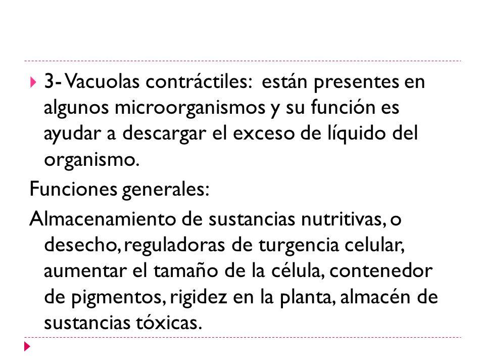3- Vacuolas contráctiles: están presentes en algunos microorganismos y su función es ayudar a descargar el exceso de líquido del organismo. Funciones