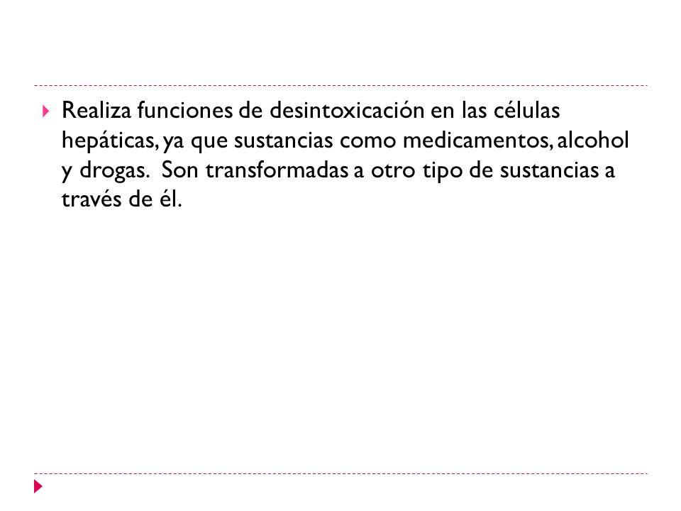 Retículo endoplasmático rugoso: se debe a la presencia de ribosomas en su superficie.