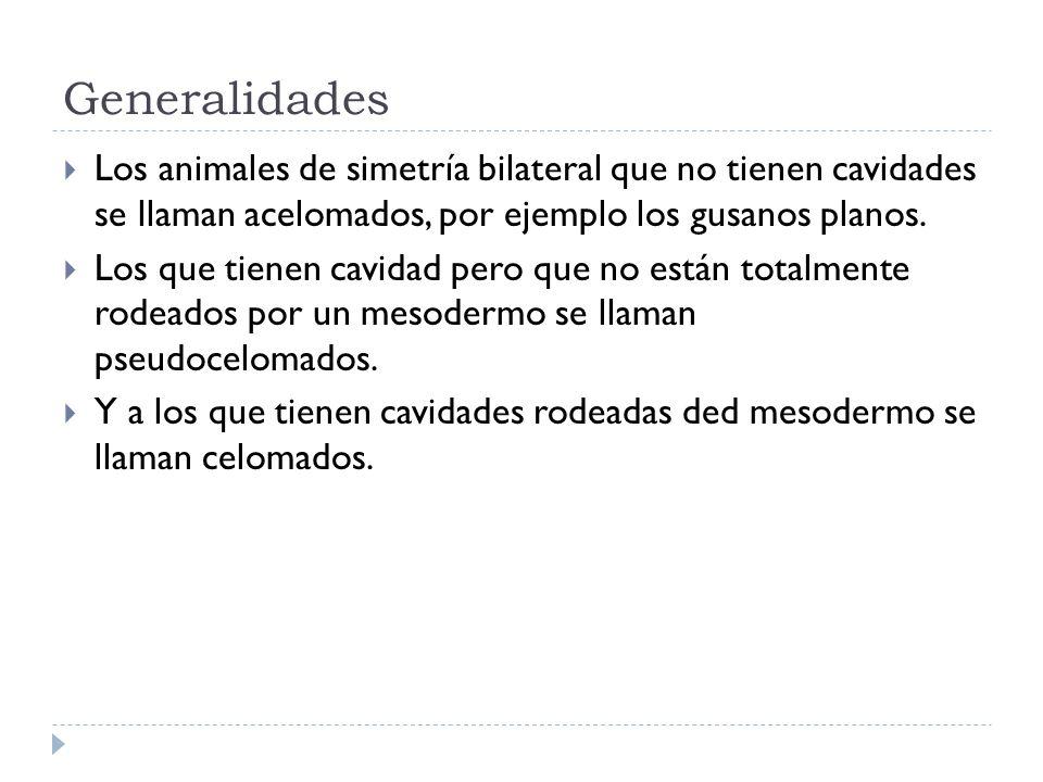 Generalidades Los animales de simetría bilateral que no tienen cavidades se llaman acelomados, por ejemplo los gusanos planos. Los que tienen cavidad