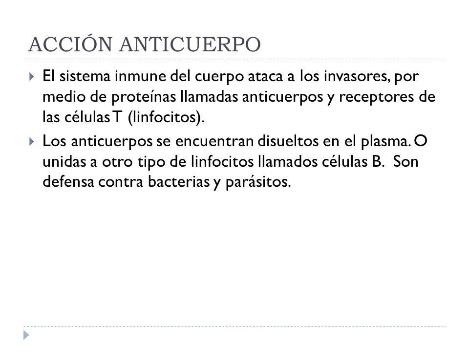 ACCIÓN ANTICUERPO El sistema inmune del cuerpo ataca a los invasores, por medio de proteínas llamadas anticuerpos y receptores de las células T (linfo