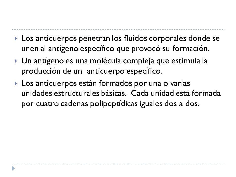Los anticuerpos penetran los fluidos corporales donde se unen al antígeno específico que provocó su formación. Un antígeno es una molécula compleja qu
