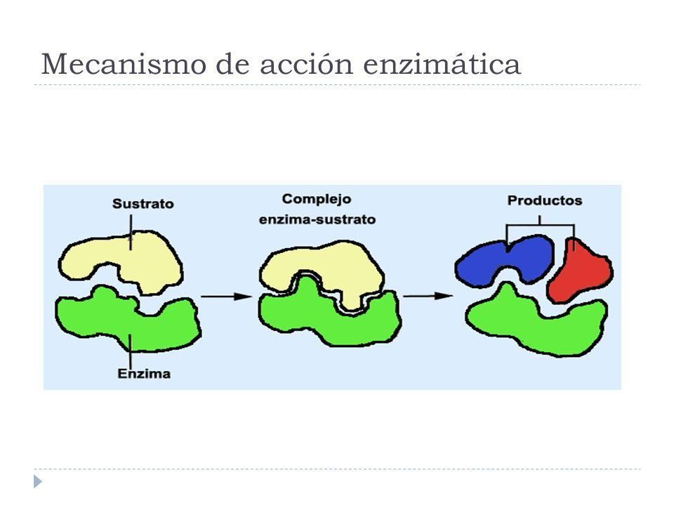 Mecanismo de acción enzimática