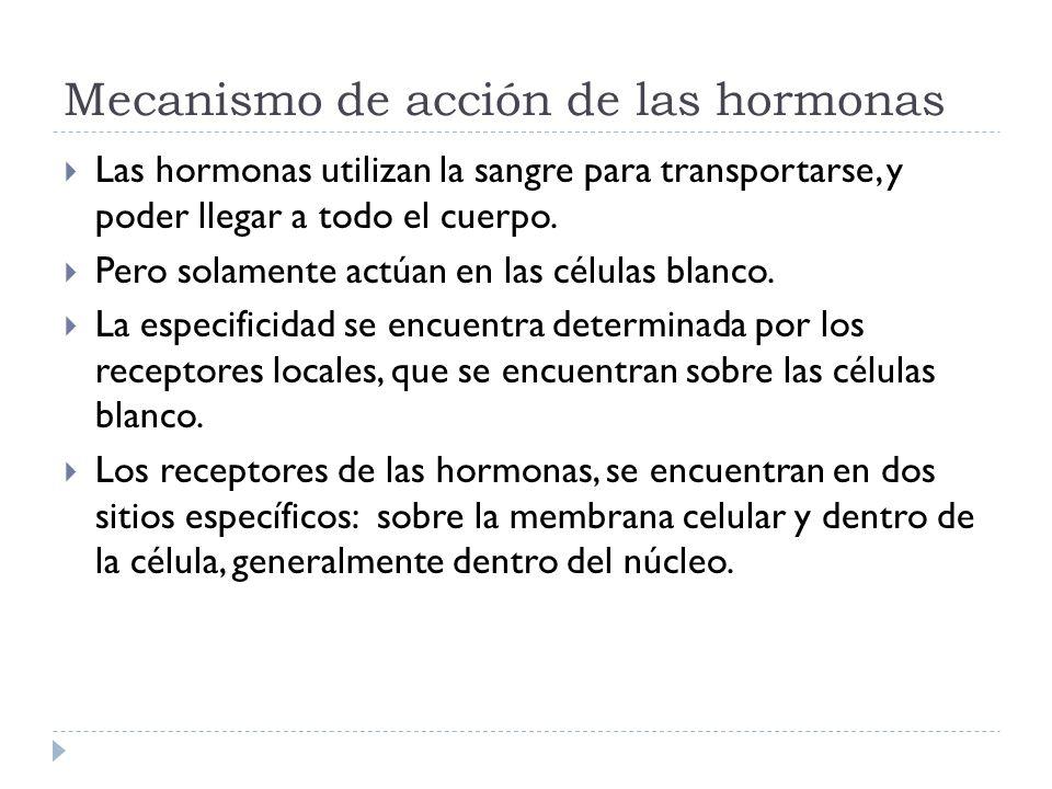Mecanismo de acción de las hormonas Las hormonas utilizan la sangre para transportarse, y poder llegar a todo el cuerpo. Pero solamente actúan en las
