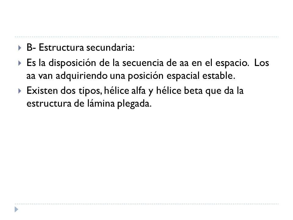 B- Estructura secundaria: Es la disposición de la secuencia de aa en el espacio. Los aa van adquiriendo una posición espacial estable. Existen dos tip