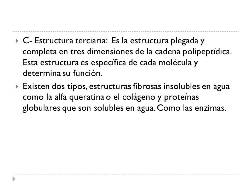 C- Estructura terciaria: Es la estructura plegada y completa en tres dimensiones de la cadena polipeptídica. Esta estructura es específica de cada mol