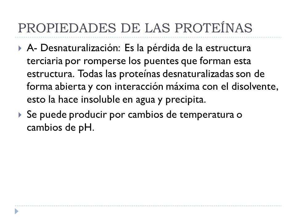 PROPIEDADES DE LAS PROTEÍNAS A- Desnaturalización: Es la pérdida de la estructura terciaria por romperse los puentes que forman esta estructura. Todas