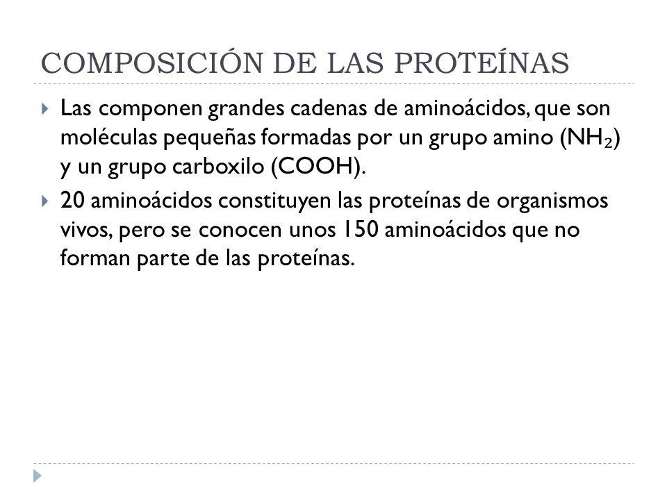 COMPOSICIÓN DE LAS PROTEÍNAS Las componen grandes cadenas de aminoácidos, que son moléculas pequeñas formadas por un grupo amino (NH ) y un grupo carb