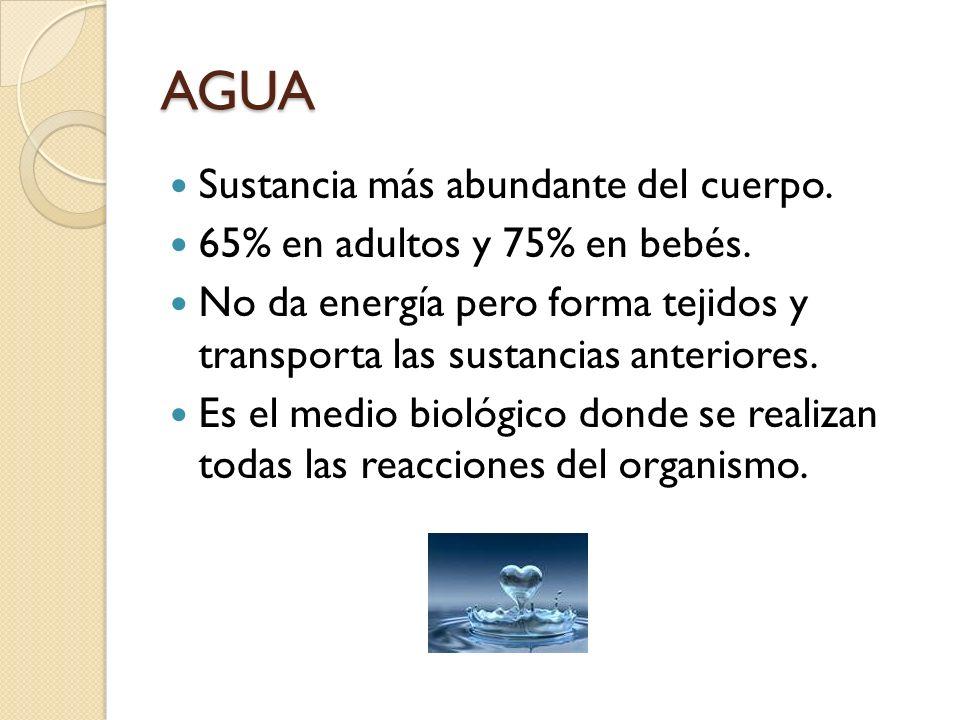 AGUA Sustancia más abundante del cuerpo. 65% en adultos y 75% en bebés. No da energía pero forma tejidos y transporta las sustancias anteriores. Es el