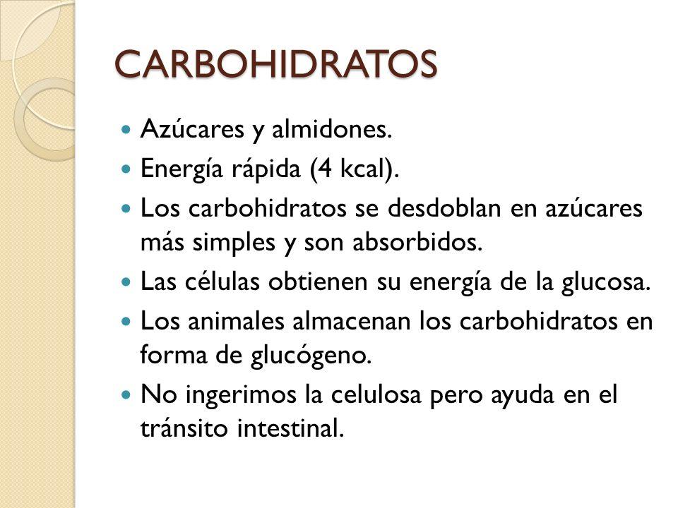 CARBOHIDRATOS Azúcares y almidones. Energía rápida (4 kcal). Los carbohidratos se desdoblan en azúcares más simples y son absorbidos. Las células obti