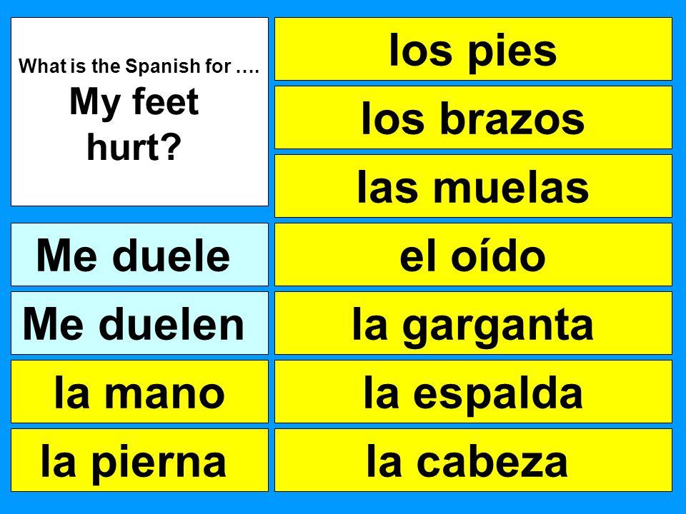 los pies las muelas los brazos el oído la garganta la espalda la cabeza What is the Spanish for …. My feet hurt? Me duele la pierna la mano Me duelen