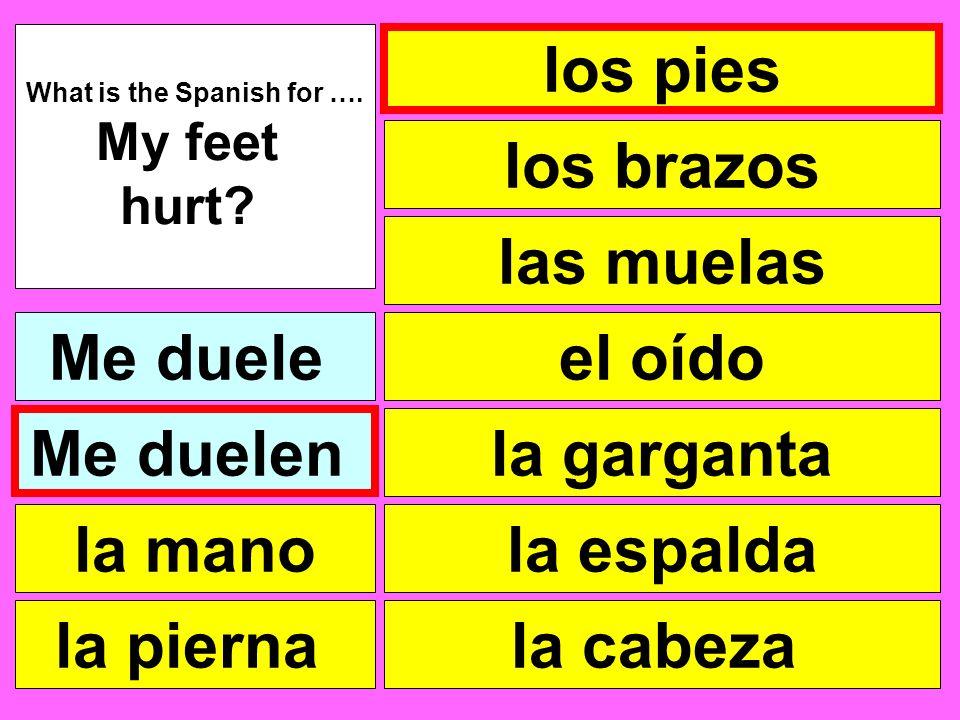 los pies las muelas el oído la garganta la cabeza What is the Spanish for …. My feet hurt? Me duele la pierna la mano Me duelen la espalda los brazos