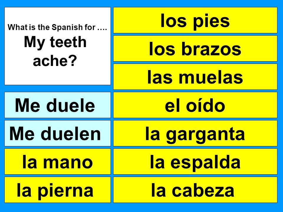 los pies las muelas el oído la garganta la cabeza What is the Spanish for …. My teeth ache? Me duele la pierna la mano Me duelen la espalda los brazos