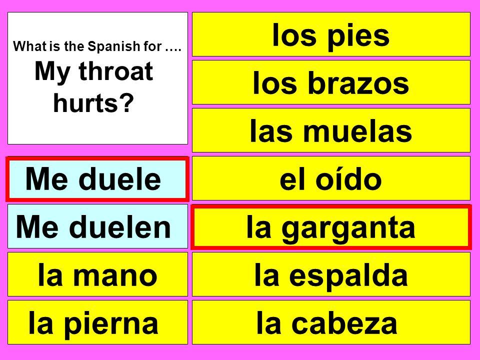 los pies las muelas el oído la garganta la cabeza What is the Spanish for …. My throat hurts? Me duele la pierna la mano Me duelen la espalda los braz