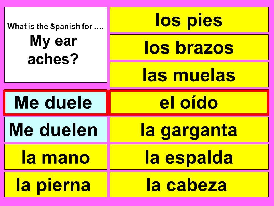 los pies las muelas el oído la garganta la cabeza What is the Spanish for …. My ear aches? Me duele la pierna la mano Me duelen la espalda los brazos