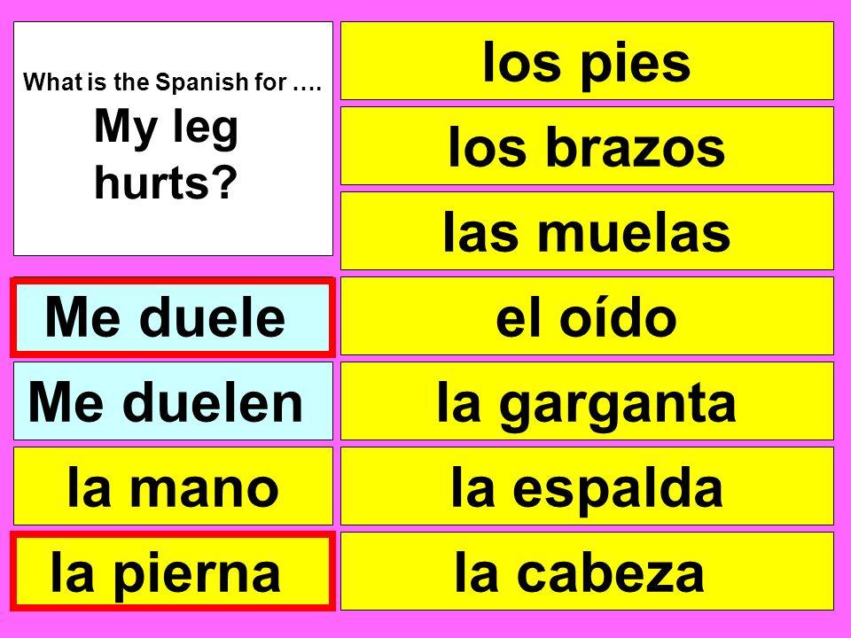 los pies las muelas el oído la garganta la cabeza What is the Spanish for …. My leg hurts? Me duele la pierna la mano Me duelen la espalda los brazos