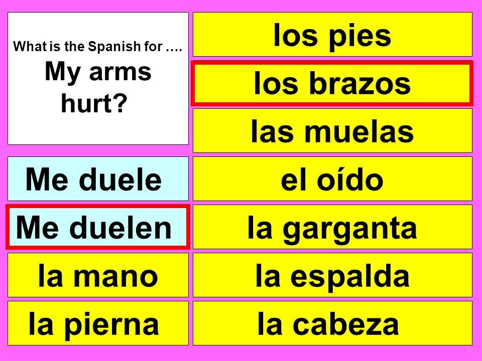 los pies las muelas el oído la garganta la cabeza What is the Spanish for …. My arms hurt? Me duele la pierna la mano Me duelen la espalda