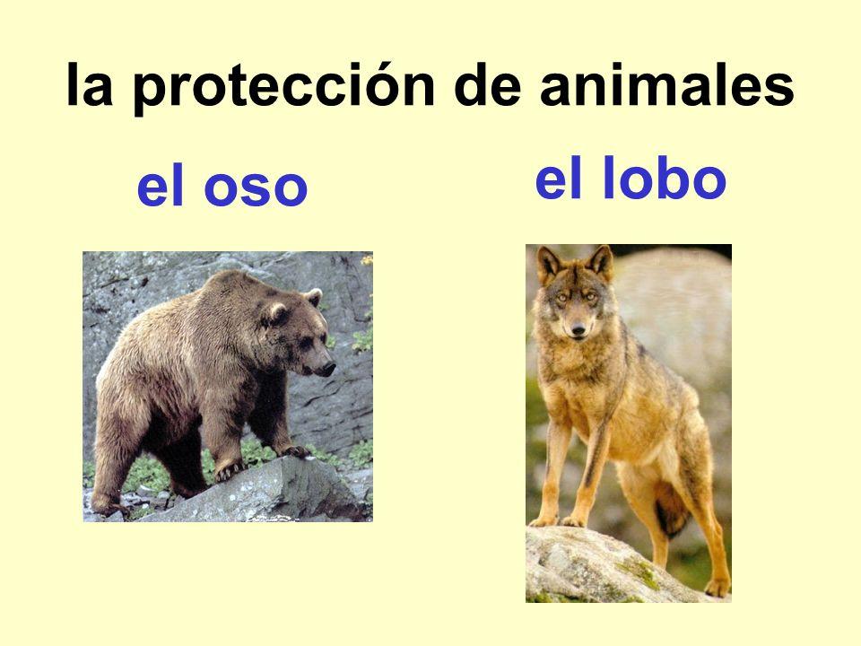 la protección de animales el oso el lobo