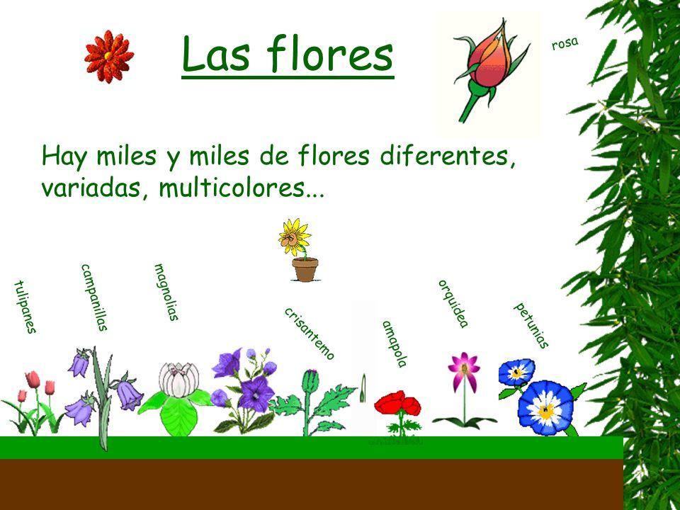 En las hojas, las plantas fabrican su alimento. Esto se llama fotos í ntesis.