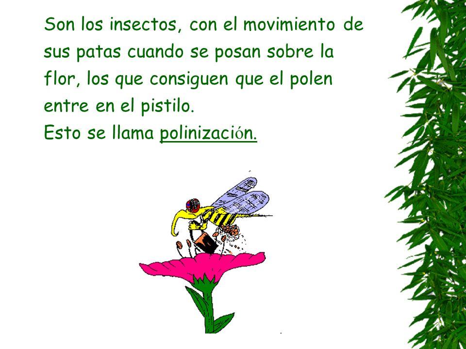 Partes de la flor En la flor se realiza la reproducci ó n de la planta: Los granos de polen de los estambres se encuentran con los ó vulos que est á n
