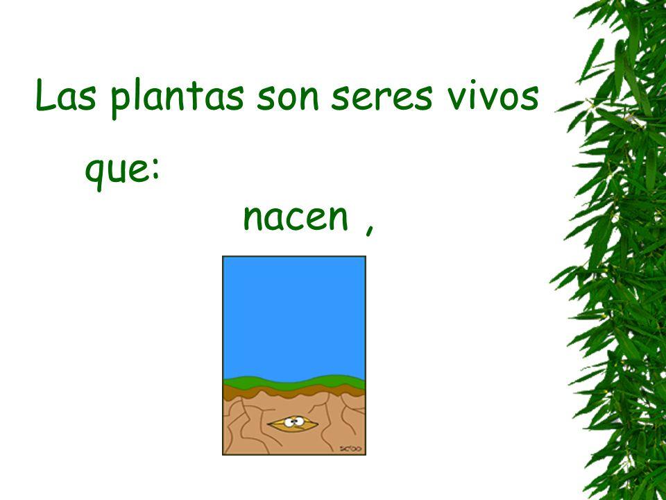 Las plantas UNIDAD 4