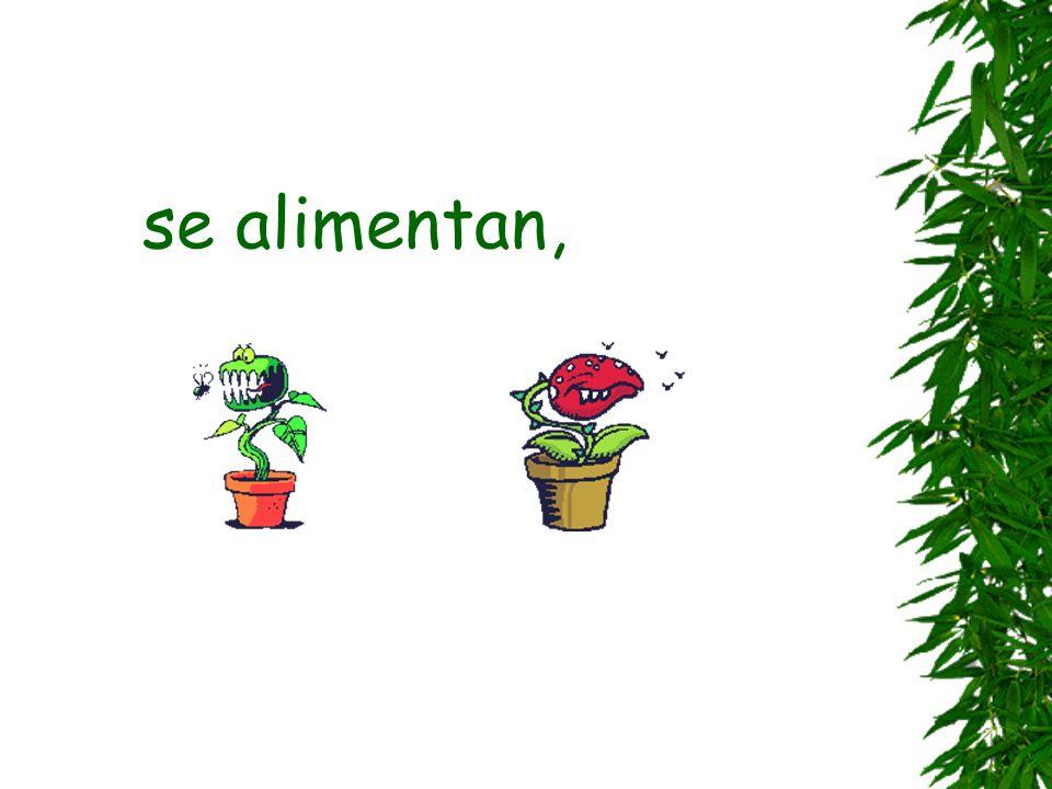 Las plantas son seres vivos que: nacen,