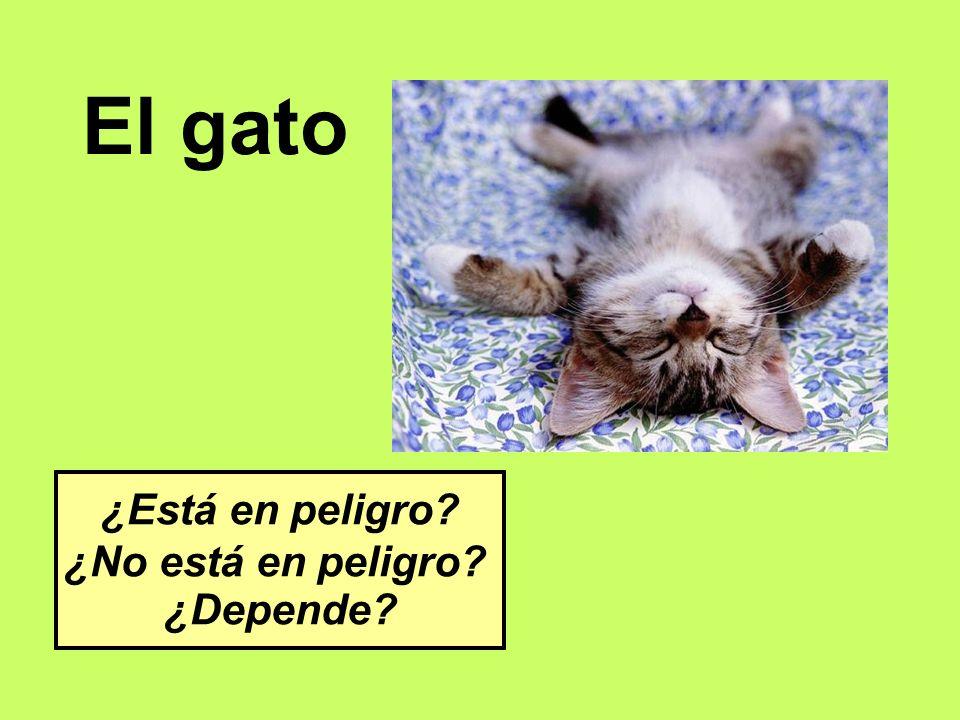 El gato ¿Está en peligro ¿No está en peligro ¿Depende