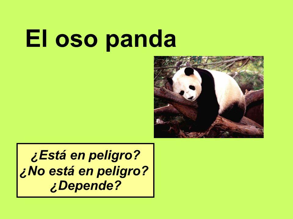 El oso panda ¿Está en peligro ¿No está en peligro ¿Depende