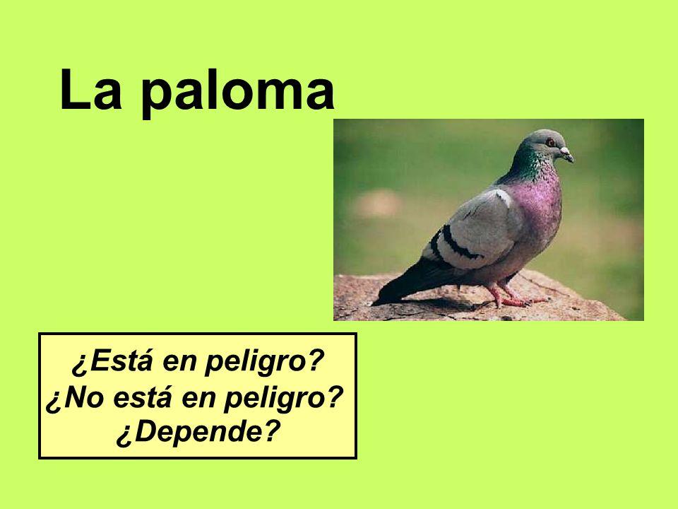 La paloma ¿Está en peligro ¿No está en peligro ¿Depende
