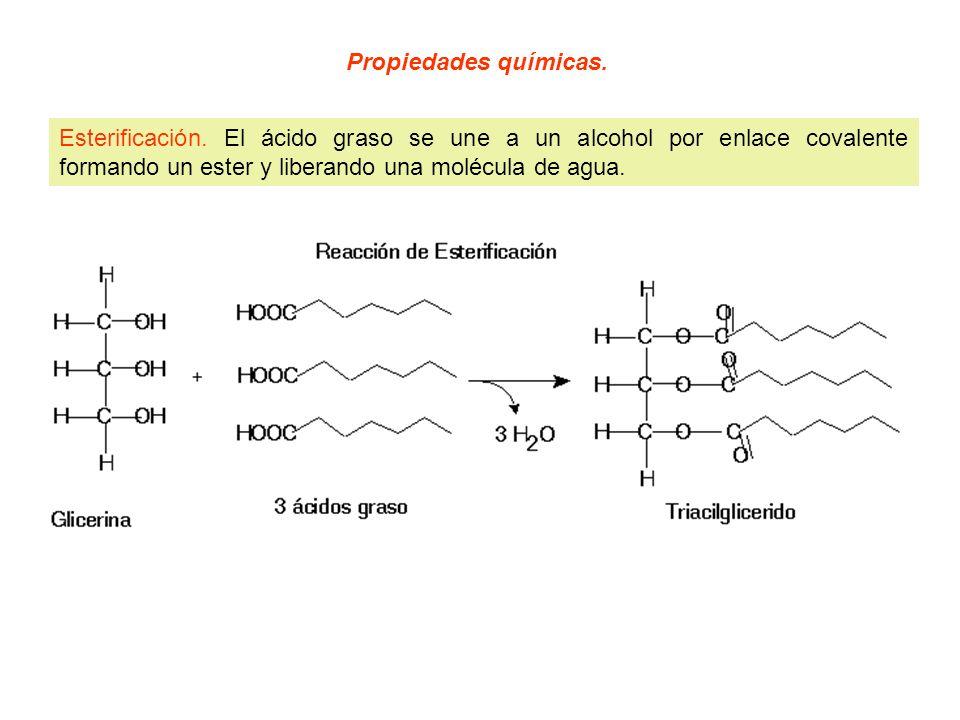Propiedades químicas. Esterificación. El ácido graso se une a un alcohol por enlace covalente formando un ester y liberando una molécula de agua.