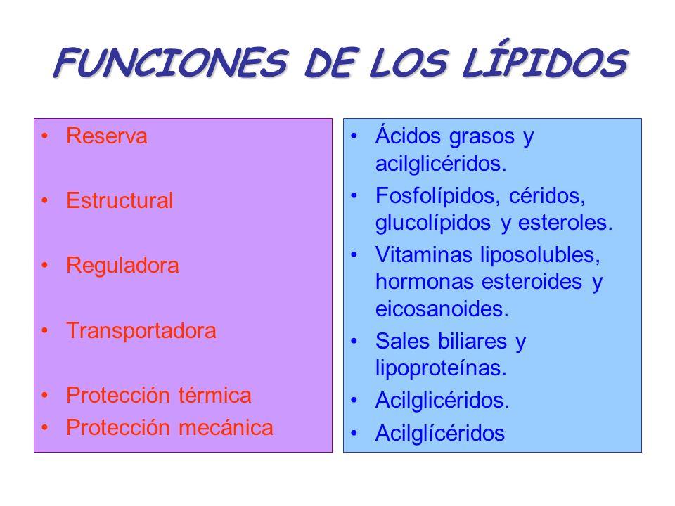 FUNCIONES DE LOS LÍPIDOS Reserva Estructural Reguladora Transportadora Protección térmica Protección mecánica Ácidos grasos y acilglicéridos. Fosfolíp