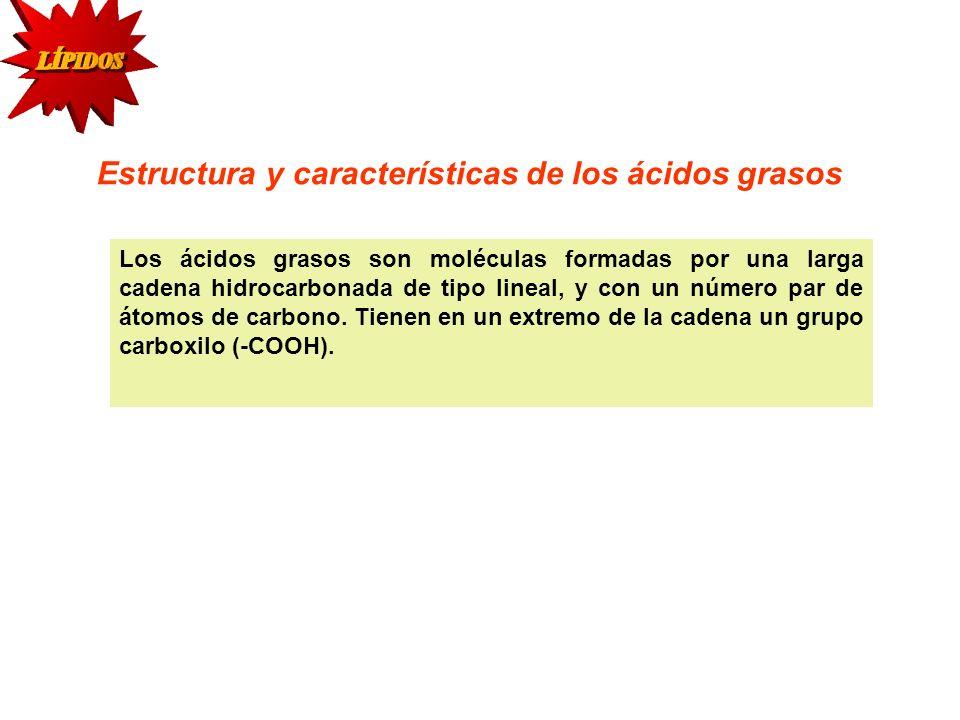 COLESTEROL El colesterol forma parte estructural de las membranas a las que confiere estabilidad.