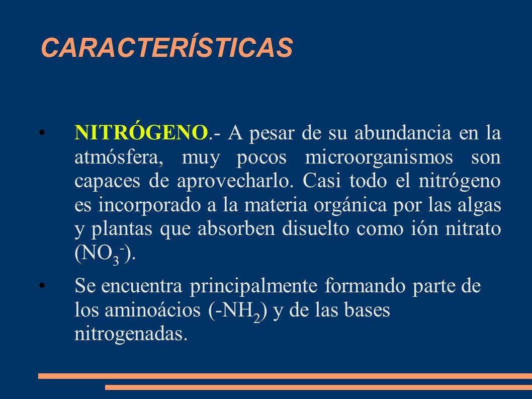 CARACTERÍSTICAS NITRÓGENO.- A pesar de su abundancia en la atmósfera, muy pocos microorganismos son capaces de aprovecharlo. Casi todo el nitrógeno es