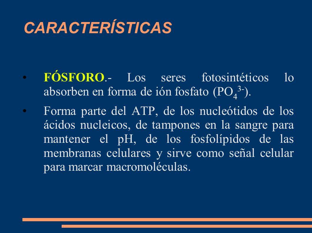 CARACTERÍSTICAS FÓSFORO.- Los seres fotosintéticos lo absorben en forma de ión fosfato (PO 4 3- ). Forma parte del ATP, de los nucleótidos de los ácid