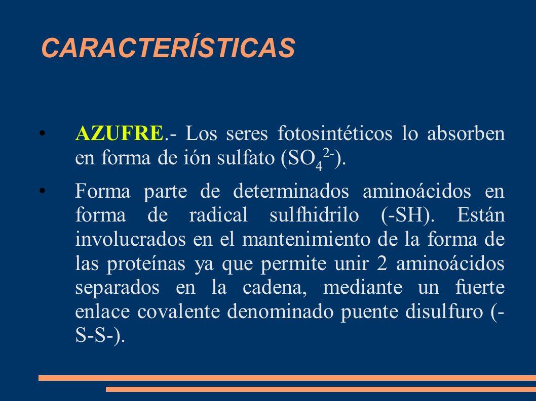 CARACTERÍSTICAS AZUFRE.- Los seres fotosintéticos lo absorben en forma de ión sulfato (SO 4 2- ). Forma parte de determinados aminoácidos en forma de