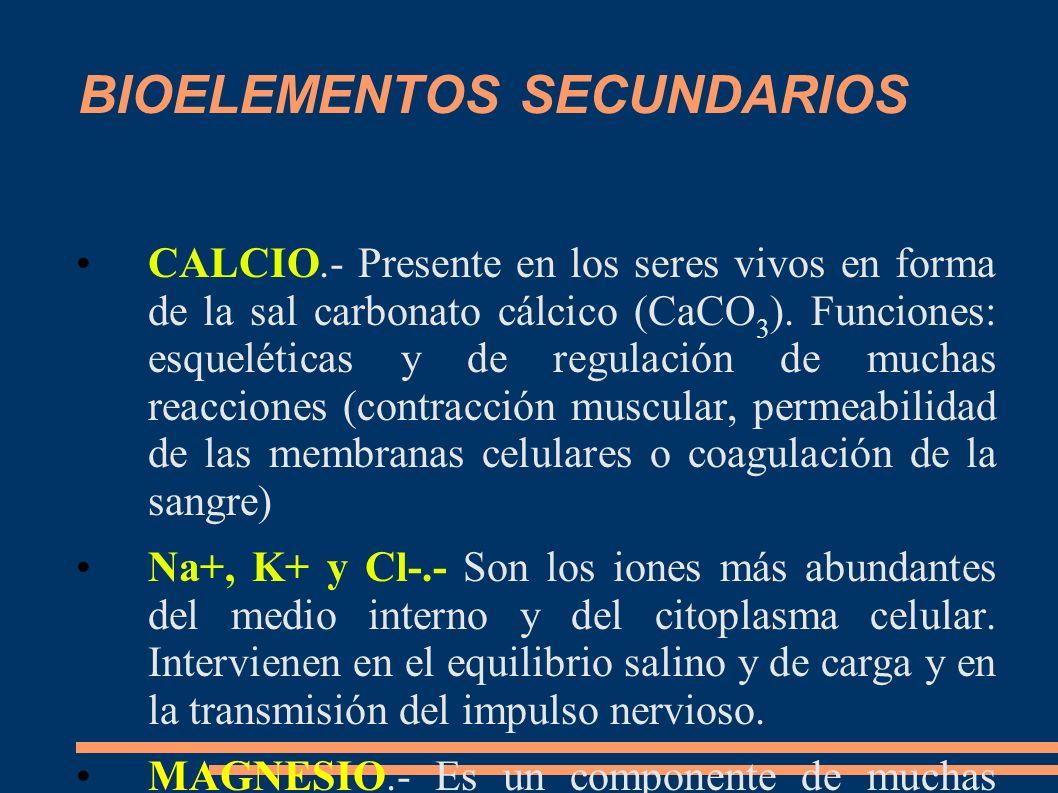BIOELEMENTOS SECUNDARIOS CALCIO.- Presente en los seres vivos en forma de la sal carbonato cálcico (CaCO 3 ). Funciones: esqueléticas y de regulación