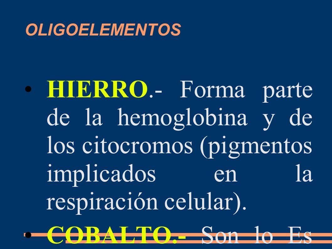 OLIGOELEMENTOS HIERRO.- Forma parte de la hemoglobina y de los citocromos (pigmentos implicados en la respiración celular). COBALTO.- Son lo Es necesa