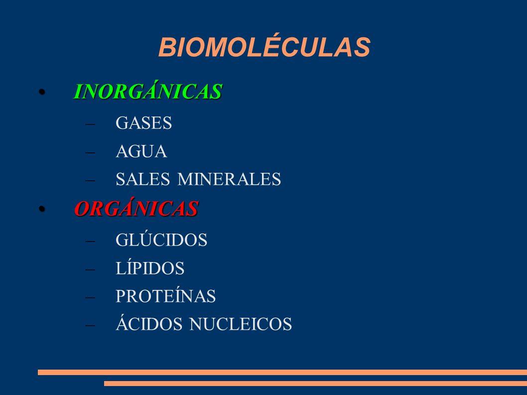 BIOMOLÉCULAS INORGÁNICASINORGÁNICAS –GASES –AGUA –SALES MINERALES ORGÁNICASORGÁNICAS –GLÚCIDOS –LÍPIDOS –PROTEÍNAS –ÁCIDOS NUCLEICOS