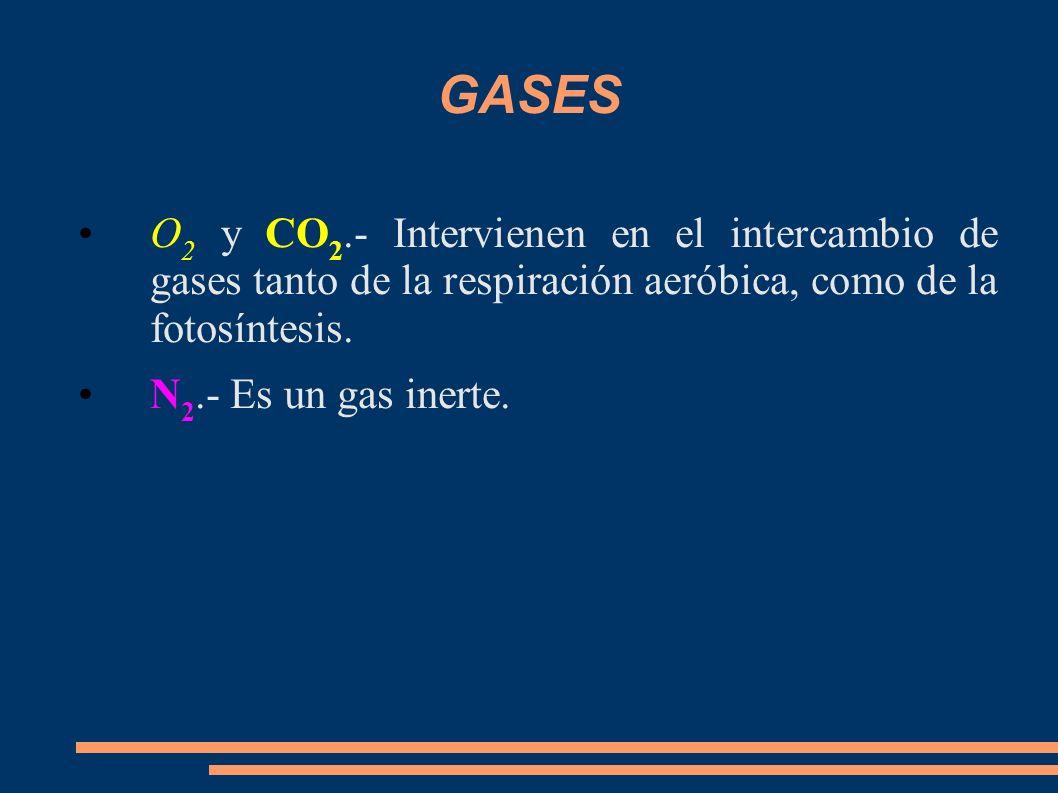 GASES O 2 y CO 2.- Intervienen en el intercambio de gases tanto de la respiración aeróbica, como de la fotosíntesis. N 2.- Es un gas inerte.