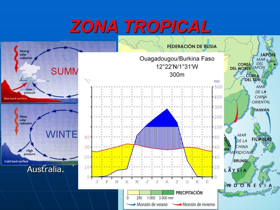 ZONA TROPICAL A medida que aumenta la latitud, 5º-25º N y S, se pasa de un clima uniforme a otro con alternancia de dos estaciones, una húmeda y otra seca.