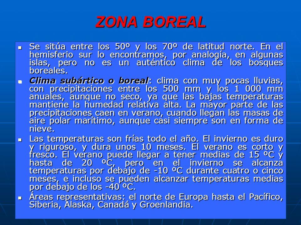 ZONA BOREAL Se sitúa entre los 50º y los 70º de latitud norte.