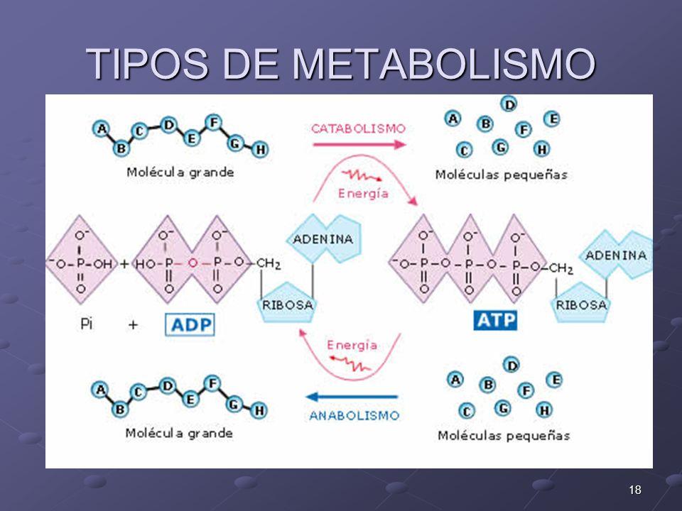 18 TIPOS DE METABOLISMO