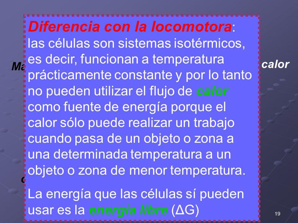 19 CATABOLISMO Madera o carbón calor caldera movimiento combustión Diferencia con la locomotora : las células son sistemas isotérmicos, es decir, func