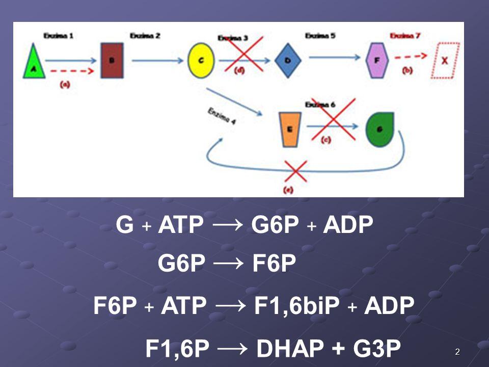 2 G + ATP G6P + ADP G6P F6P F6P + ATP F1,6biP + ADP F1,6P DHAP + G3P