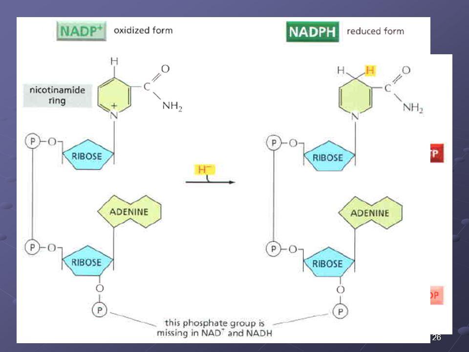 26 PRODUCTOS DEL METABOLISMO Moléculas activadas que transportan: Grupos químicos (ATP) Grupos químicos (ATP) Protones y electrones (NADH y FADH2) Pro