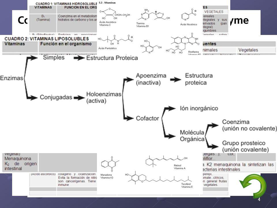 4 ESTRUCTURA Apoenzima: es la parte proteica de la enzima despojada de los cofactores o grupos prostéticos que puedan ser necesarios para que la enzim